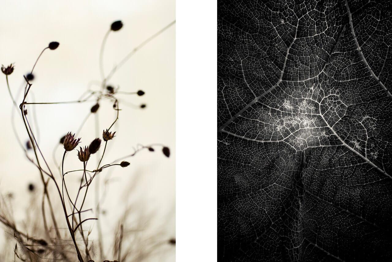 Robert Mertens: Leica Masterclass - Die Natur im Fokus