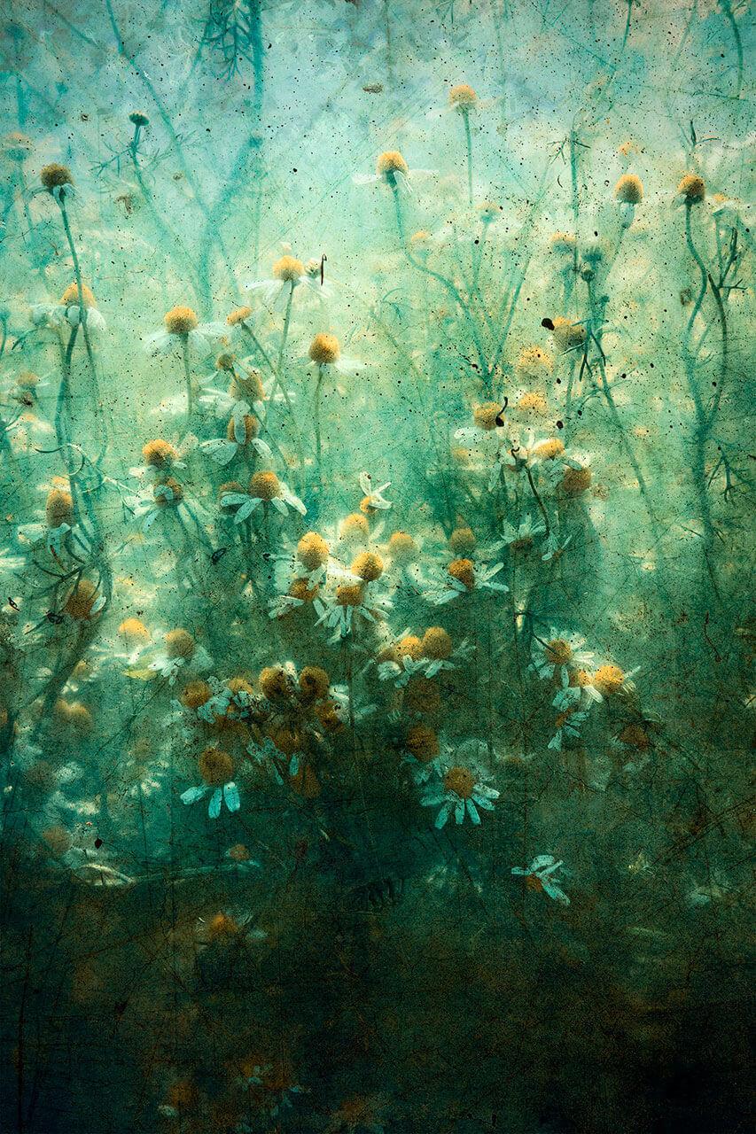 Robert Mertens: Künstlerische Bildbearbeitung