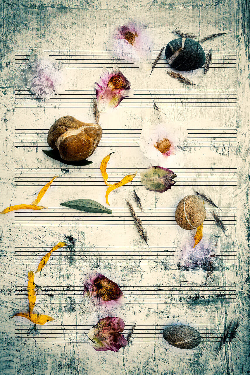 Score for flowers, stones and wind